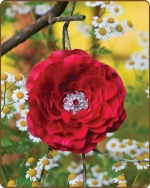Ruffled Ranunculus Flower Clippie Red
