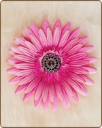Daisy Flower Clippie Hot Pink