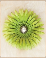 Daisy Flower Clippie Light Artichoke