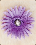 Daisy Flower Clippie Lilac